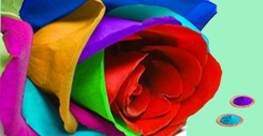 Holi gift Flowers