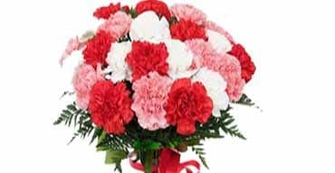 online Carnations Delivery in Visakhapatnam