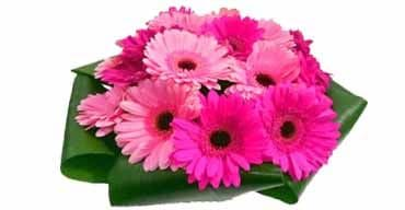 online Gerberas delivery in gurgaon