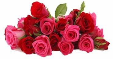 Online Rose delivery in Guntur